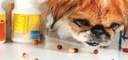 kak-doljny-proishodit-issledovaniya-lekarstvennyh-preparatov-dlya-veterinarnogo-primeneniya