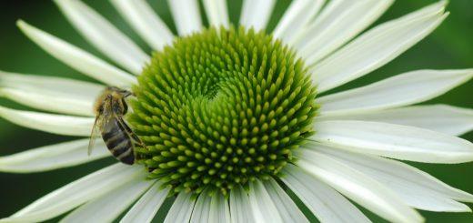 Лекарственные растения тесты