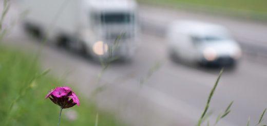 Причины загрязнения воздуха в Московской области