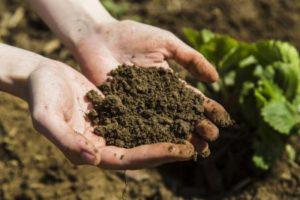 Анализ органических удобрений