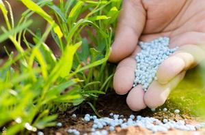 Анализ удобрений, содержащих нитраты